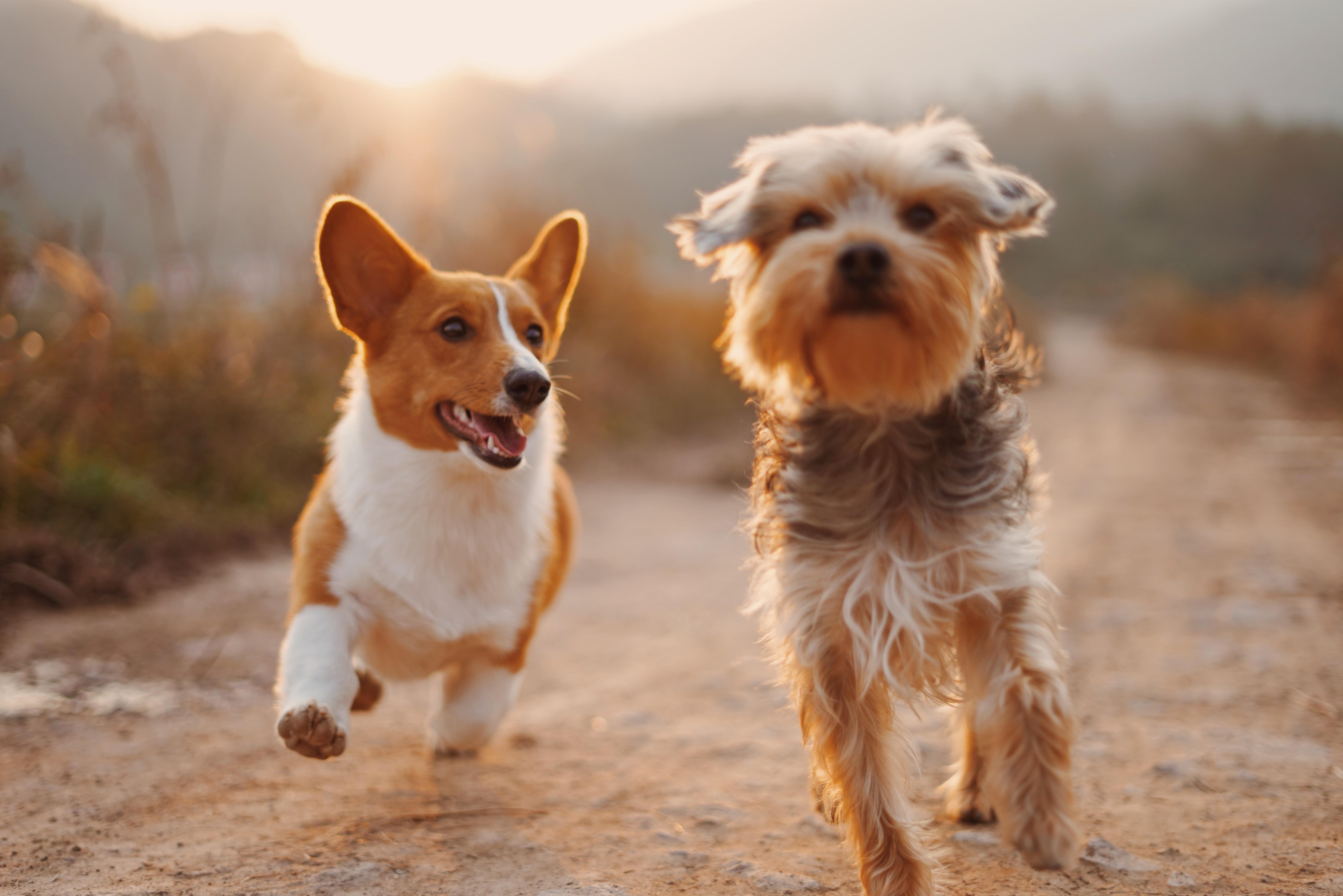 犬と一緒に結婚式を挙げるための方法
