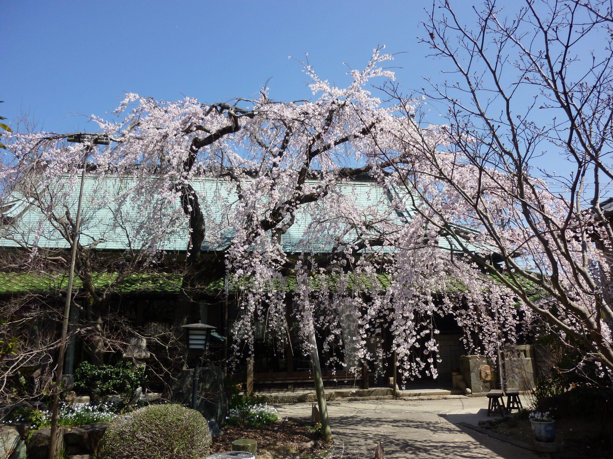 岡崎の家族結婚式ならここ!四季を感じる「しょうやの杜」の会場レポート